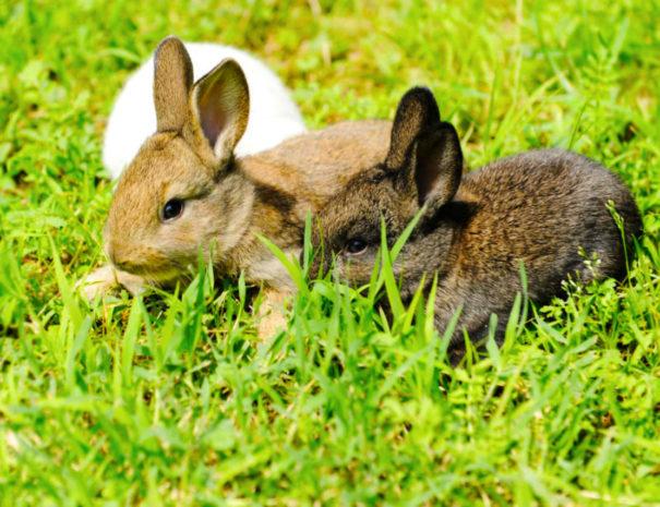 coniglietti-fattoria-colle-ulivi